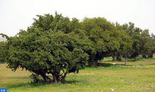 Photo of مؤسسة محمد السادس للبحث والحفاظ على شجرة الأركان تحتفل يوم 10 ماي باليوم العالمي لشجرة الأركان في نسخته الأولى